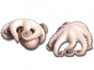 Осьминоги варено-мороженый купить в Абакане