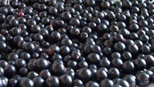 Чёрная смородина  (заморозка) купить в Абакане